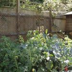 edible garden design bromley, raised beds, grow your own vegetables , gardening lessons
