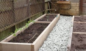 edible garden design bromley, grow your own, gardening lessons, seedlings, easy maintenance