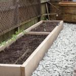 edible garden design bromley, grow your own, gardening lessons, seedlings, easy maintenance