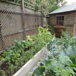 edible garden design bromley, raised beds,grow your own vegetables, gardening lessons,