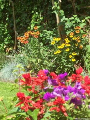 planting design lewisham, london, helenium, salvia, festuca glauca