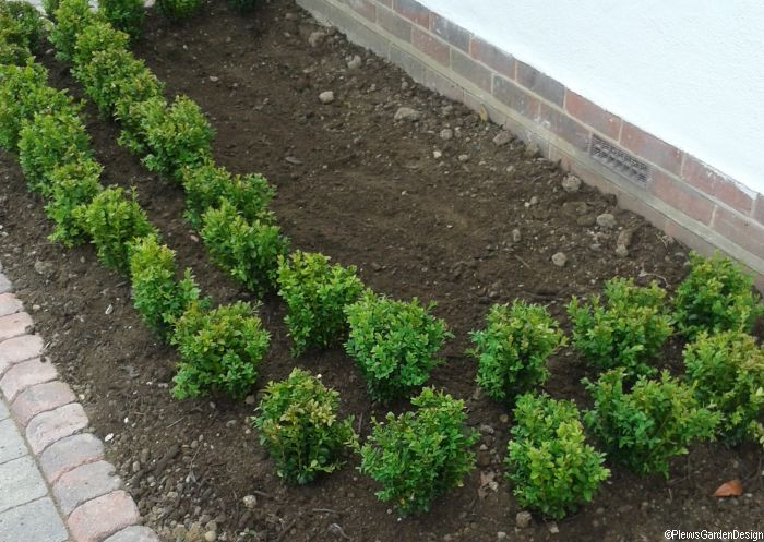 Garden Design Hedges box hedging - planting design ideas | garden designer | garden advice