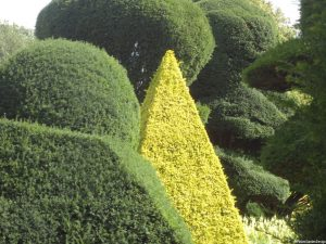 topiary, levens hall, cumbria, massed topiary