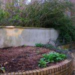 dead shrubs, before planting design nursing home