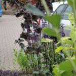 planting design, bromley, kent, shrubs, nursing home, car park