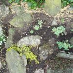 lewisham planting design, london, rockery, rock garden