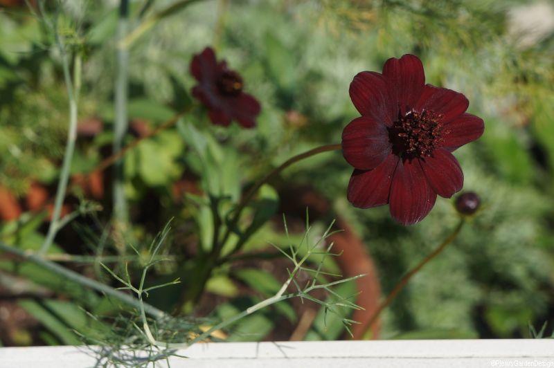 Gardening Jobs For April Garden Design Landscapers