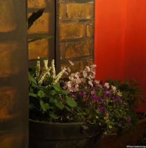 flowers -set - the herbal bed