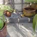 Welsh slate patio, black bricks