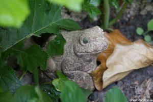 frog, garden ornament, garden sundries
