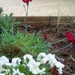 redhill, surrey, garden design, cottage garden. planting design, decking