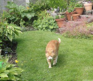 rhubarb-ginger-cat-garden