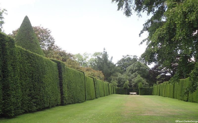 Should I Plant A Garden Hedge Garden Consultant Garden Designer