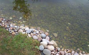 wildlife pond, pebble edge