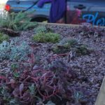 raised bed, sempervirens,sedum,front garden, london, raised beds, garden design, Plews truck , alpines