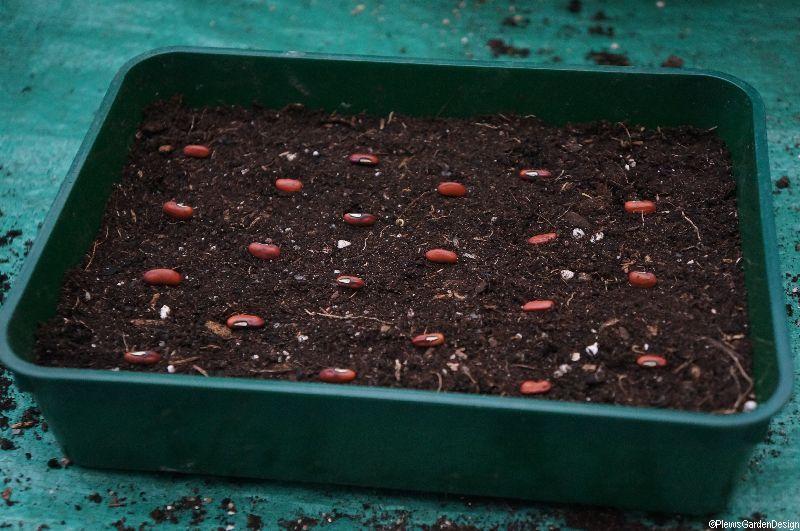 Sowing Seeds in Diagonal Pattern