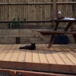 decking, raised beds, fencing, Croydon, garden design, oak sleepers, black cat