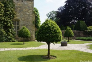 lawn, topiary, trees, Nymans