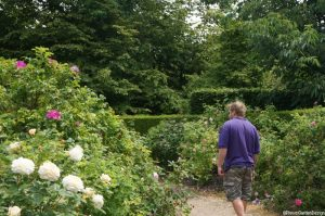 rose garden Nymans garden, Nathan, Plews