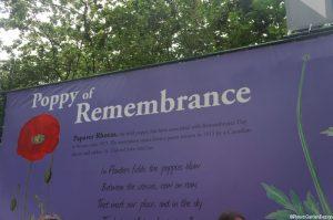 Remembrance poppy poster, Chelsea flower show 2014