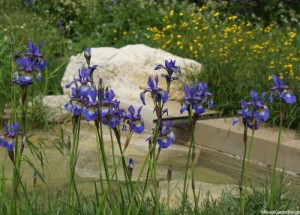 blue iris and white rock by pool, Chelsea flower show
