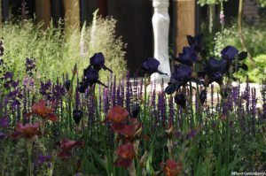 iris in cloudy bay sensory garden, chelsea flower show