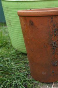 long tom clay pot