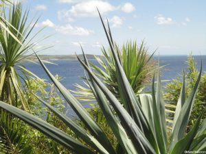 St Michaels Mount, tropical planting, yucca, palm trees, holiday gardens, Cornwall, Marie Shallcross, sea