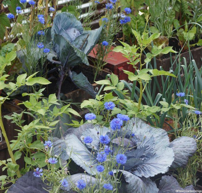 Edible flowers eating your flower garden garden consultant for Garden consultant