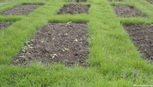 crop rotation beds with grass paths, grow your own vegetables in rows, edible gardens, cultivation