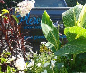 Plews truck, plant nursery, Hydrangea paniculata, Canna, lobelia 'queen victoria'