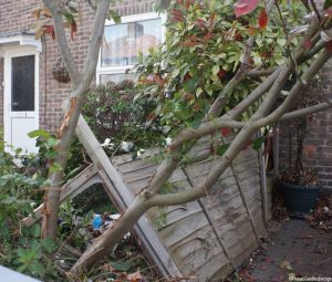 car accident damage, front garden, fence, garden plants,bromley, photinia