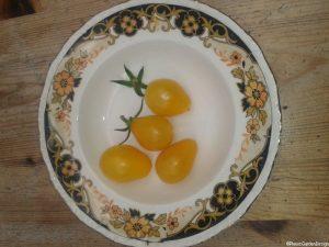 heritage variety - yellow cherry plum tomato, vintage china