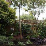 planting design, shrubs, garden fence, front garden, bromley