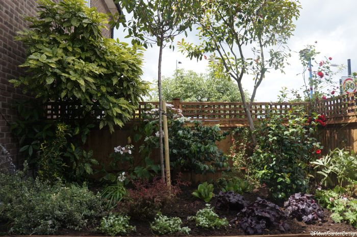 new planting and new garden fence, bromley front garden | Plews Garden Design