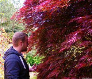Nathan admiring acer, Scotney castle garden, marie shallcross, kent, national trust garden