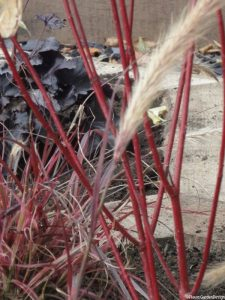 cornus 'elegantissima', Heuchera 'obsidian', penisetum 'fireworks', hexagonal oak sleeper raised beds, front garden design, plews