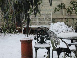 in your winter garden