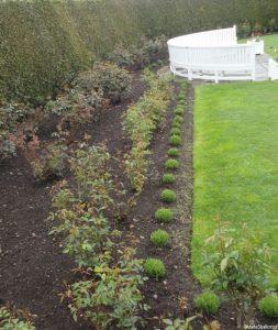 lavender, rose borders, emmetts
