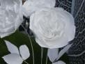 harrods fragrance garden, chelsea flower show 2015, white paper roses