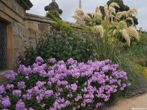 phlox, echinops, ornamental grasses, Hardwick hall gardens, , Derbyshire
