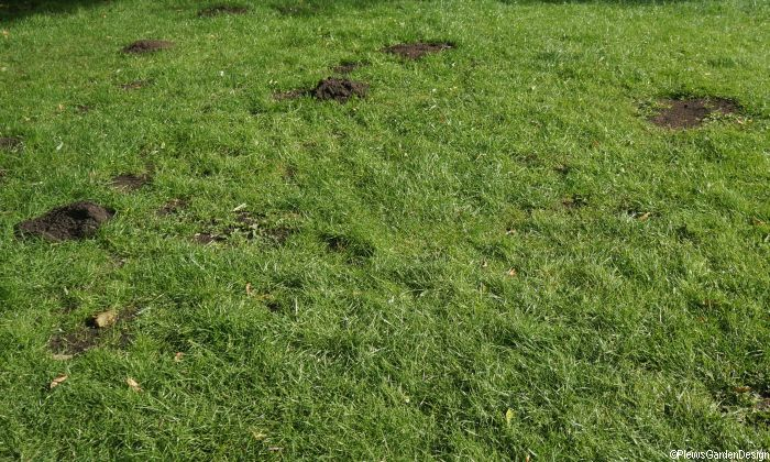 Garden Moles Pest or Predator