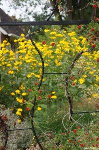 metal arbour, red honeysuckle berries, helianthemum, patchwork gardens, york quilt museum