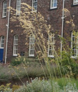 stipa gigantea, patchwork gardens, york quilt museum