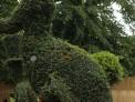 Dodo, alice in wonderland topiary, rhs hampton court flower show 2015