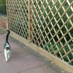 diamond trellis garden fence, cat