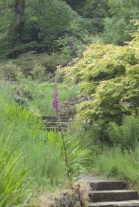 woodland walk, armadale castle gardens