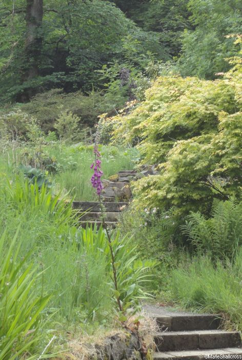 Woodland habitats in your garden garden designer for Garden consultant