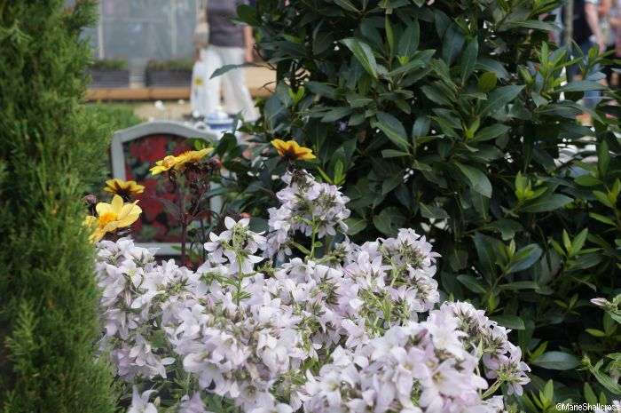 tea party garden alice in wonderland - Alice In Wonderland Garden