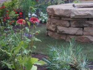 fire pit, echinacea, dianthus, artificial grass, drystone wall, plews garden design, plews garden landscaping, garden design, landscape gardener, garden project, ornamental edible gardens,,planting design,